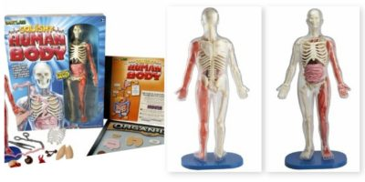 Smartlab Human Body Science Kits: A hands on experience to getting to know the human body. Great for preschoolers